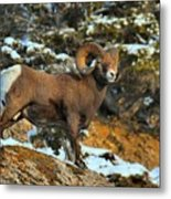 Blending In In Jasper Metal Print