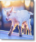 Little Baby Goat Sunset Metal Print
