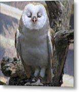 Blinking Owl Metal Print