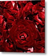 Blood Red Roses Metal Print
