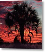 Blood Red Sunset Palm Metal Print