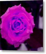 Bloom N Love-abstract Metal Print