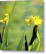 Blooming At Green Lake Metal Print