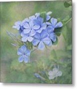 Blooming Blues Metal Print