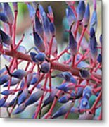 Blooming Bromeliads Collage Metal Print