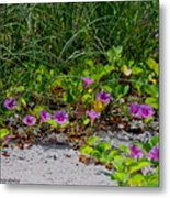 Blooming Cross Vines Along The Beach Metal Print