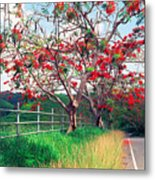 Blooming Flamboyan Trees Along A Country Road Metal Print