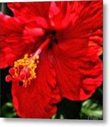 Blooming Flower 2 Metal Print