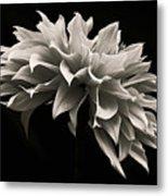 Blooming II Metal Print