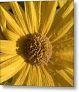 Blooming In My Ditch Metal Print