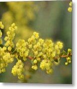 Blooming In Yellow Metal Print
