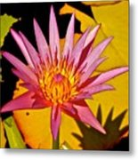 Blooming Lotus Flower Metal Print
