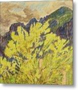 Blooming Palo Verde Metal Print