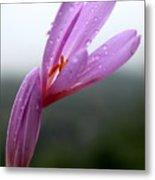 Blooming Purple Flower Metal Print