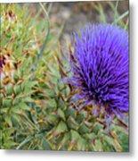 Blooming Purple Teasel Metal Print