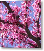 Blooming Red Buds Metal Print