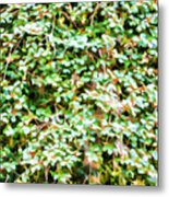 Blooming Shrubs  Metal Print