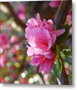 Blooming Tree Metal Print