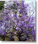Blooming Tree With Purple Flowers Metal Print