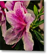Blooming Wet Metal Print