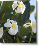 Blooms In Paradise Metal Print