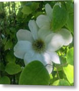 Blooms In Vine Metal Print