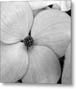 Blossom In Black And White Metal Print