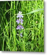 Blossom In The Grass Metal Print