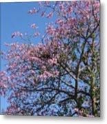Blossom Time Metal Print