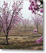 Blossom Trail Metal Print