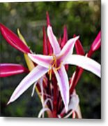 Blossoming Beauty Metal Print