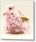 Blossoming Cherry Twig Metal Print