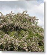Blossoming Tree Metal Print