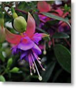 Blossoms And Blooms Metal Print