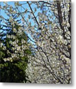 Blossoms And The Bard Metal Print