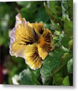 Blossoms And Waterdrops  Metal Print