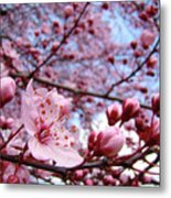 Blossoms Art Blue Sky Spring Tree Blossoms Pink Giclee Baslee Troutman Metal Print