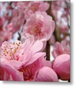 Blossoms Art Print Pink Spring Blossom Baslee Troutman Metal Print
