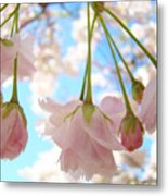 Blossoms Art Prints 52 Pink Tree Blossoms Nature Art Blue Sky Metal Print