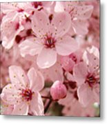 Blossoms Art Prints 63 Pink Blossoms Spring Tree Blossoms Metal Print