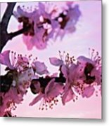 Blossoms At Sunset Metal Print
