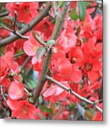 Blossoms Branches And Thorns Metal Print