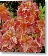 Blossoms In A Summer Shower Metal Print