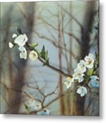 Blossoms In The Wild Metal Print