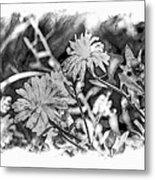 Zinnia Blossoms Metal Print