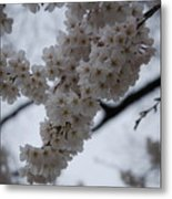 Blossoms Of Dc Metal Print