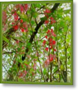 Blossoms Of Spring Time Metal Print