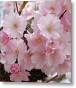 Blossoms On Bark Metal Print
