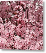 Blossoms Pink Tree Blossoms Giclee Prints Baslee Troutman Metal Print
