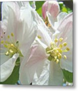 Blossoms Spring Apple Tree Art Prints Baslee Troutman Metal Print